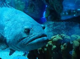 types of aquarium covers u2013 fish tank coffee table fun