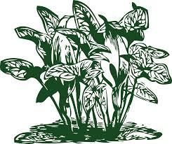 Tropical Plants Images - clipart tropical plants