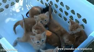 basket of meowing kittens youtube