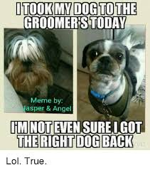Memes Today - itook dog to the groomers today meme by asper angel im