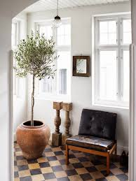 trend alert olive trees for indoor decorating aol lifestyle