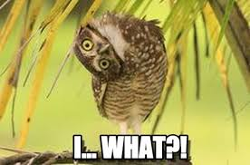 Head Tilt Meme - i what head tilt owl meme on memegen