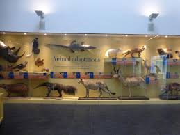 Delaware natural attractions images Animal adaptations at delaware museum of natural history picture jpg