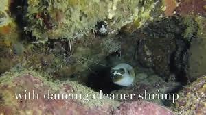 Dive Flag Australia Guiding Diving Down Under With Abc Scuba Dive U0026 Accommodation Port