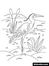 Aimer Les Pages A Colorier Pour Les Adultes Egrets Birds 4 Coloring
