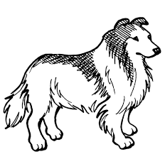 rough collie dog coloring free printable coloring pages