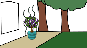 how to grow bougainvillea 9 steps with pictures wikihow