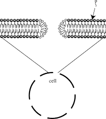 current techniques for single cell lysis journal of the royal