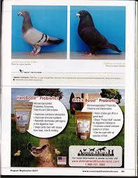 american racing pigeon union august 2017