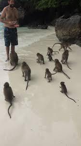 koh phi phi maya bay snorkelling monkey beach and more u2013 small