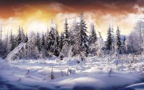 winter background hd on wallpaperget com