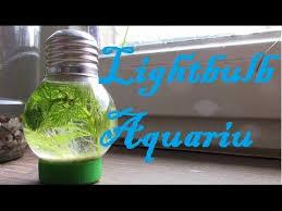24 aquarium light bulb building your own diy light bulb aquarium youtube