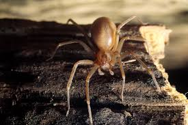 Are Spiders Attracted To Light Why Did Thousands Of Venomous Spiders Swarm A House U2013 National