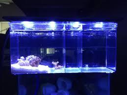 Refugium Light Marina Breeder Box As Pico Pico Reefs Nano Reef Com Community