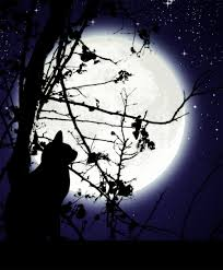 cat who loved the moon by keysan on deviantart