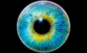 Gene Therapy For Blindness News Of Note U2014gene Therapy To Restore Sight Umbilical Cord Cells