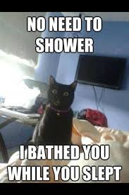 No Meme Cat - no need to shower cat meme
