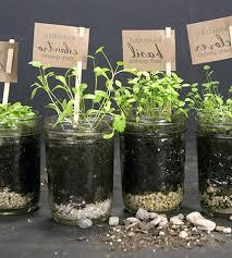 window herb harden kitchen herb garden kit indoor kitchen herb garden kitchen herb