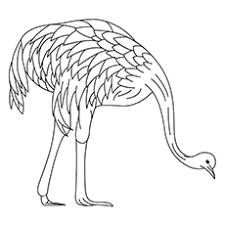 coloring page for toddlers top 10 emu coloring pages for toddlers