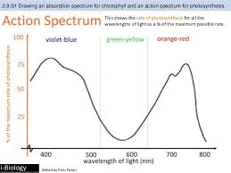 the absorption of light by photosynthetic pigments worksheet answers bioknowledgy 2 9 photosynthesis