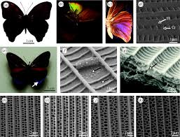 a review of the diversity and evolution of photonic structures in