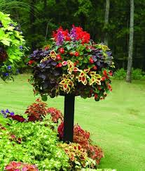 15 best gardening images on pinterest container plants facebook
