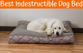 best indestructible dog bed in 2017 us bones