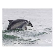 unique dolphin gifts baby and dolphin postcard baby gifts child new born gift