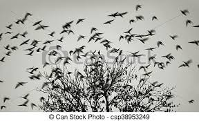 birds flying away from the tree stock photo search photographs and