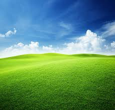green color pictures images and stock photos istock
