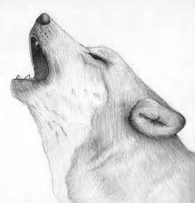 wolf cry 2008 i really love wolves and always found illu u2026 flickr