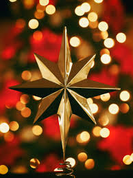 christmas tree flower lights free images branch light bokeh star leaf flower petal red