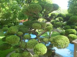 Topiary Cloud Trees - 349 best niwaki images on pinterest japanese gardens bonsai