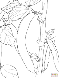 green bean coloring page free printable coloring pages