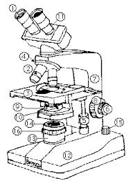 805 microscope lab answers
