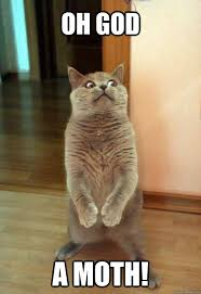 Moth Meme - oh god a moth cat meme cat planet cat planet