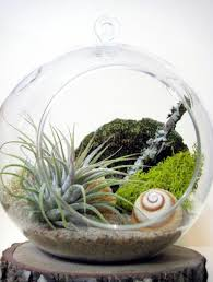 home decoration sample picture of tropical plant terrarium 3