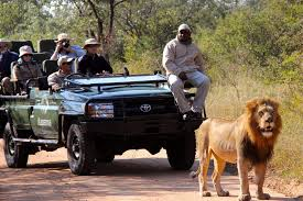 south africa in 2016 where to go and what to see rothschild safaris