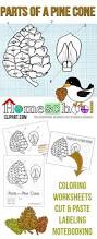 pine cone science printables