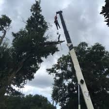 majestic tree service tree services east orlando orlando fl
