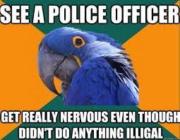 Parrot Meme - the very best of the paranoid parrot meme