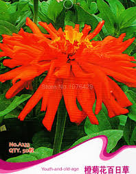 compare prices on orange flowering plants online shopping buy low
