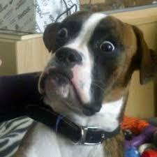 Dog Meme Generator - skeptical dog meme generator