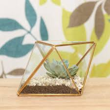 gold faceted succulent terrarium kit by dingading terrariums