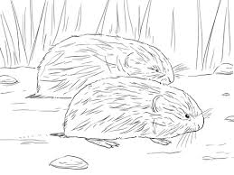 brown lemming coloring free printable coloring pages