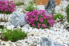 rockery garden plants stock photos u0026 pictures royalty free