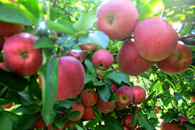 apple orchards near kansas city kshb com 41 action news