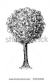 tree drawing stock vector 371720752 shutterstock