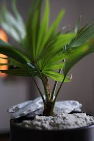 Home Decor Images Free by Free Images Branch Growth Leaf Flower Interior Pot Green