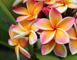 hawaii ictxv 2019